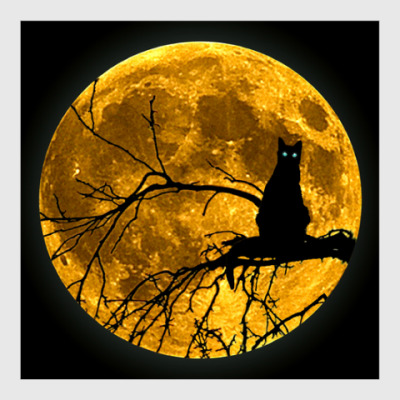 Постер Луна и кошка