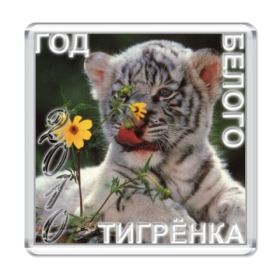 "Магнит  ""Год белого тигрёнка"""
