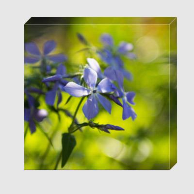 Холст садовая фиалка