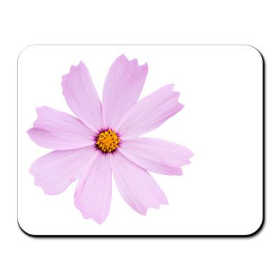 Коврик для мыши Цветок космеи (Cosmos Cav.)