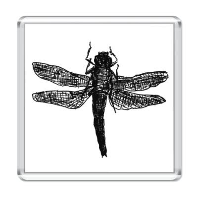 Магнит Dragonfly
