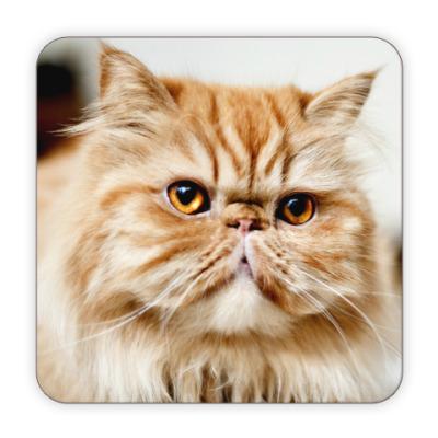 Костер (подставка под кружку) Котик барадатик