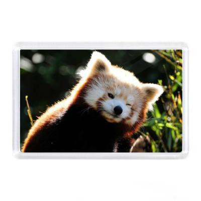 Магнит Малая панда