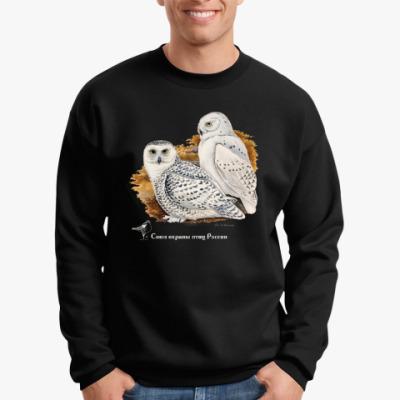 Свитшот Белые совы