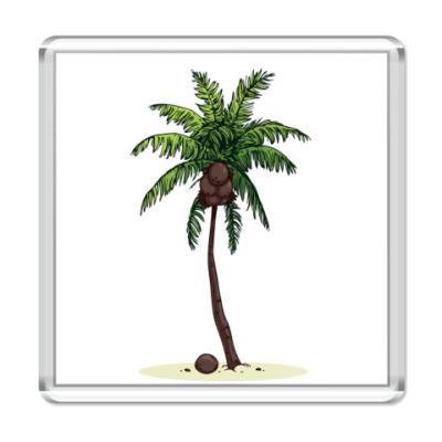 Магнит Кокосовая пальма