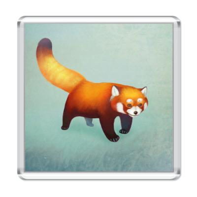 Магнит Красная панда