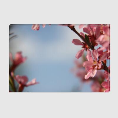 Холст цветущий миндаль
