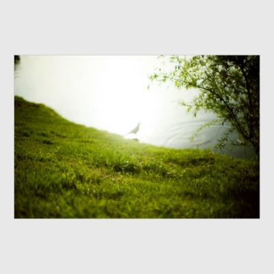 Постер Оттенки зелёного