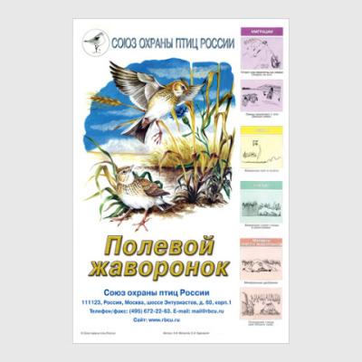 Постер Полевой жаворонок