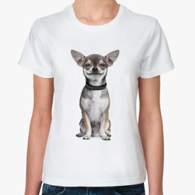 Классическая футболка Чихуахуа
