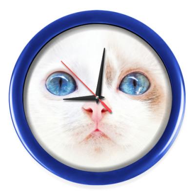 Настенные часы Няшный котенок