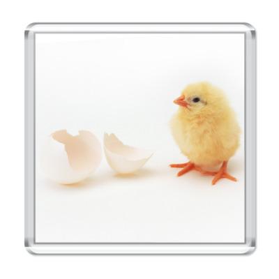 Магнит Цыпленок