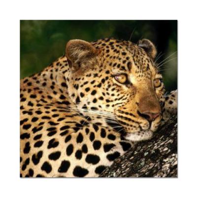 Наклейка (стикер) Мечтательный леопард