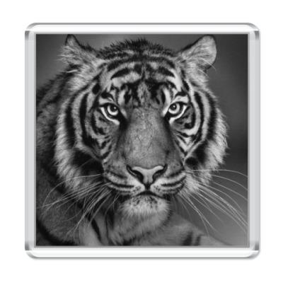 Магнит Глаза тигра