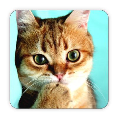 Костер (подставка под кружку) Котик стесняшка обояшка