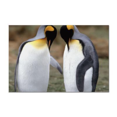 Наклейка (стикер) 'Penguins