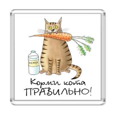 Магнит Корми кота правильно