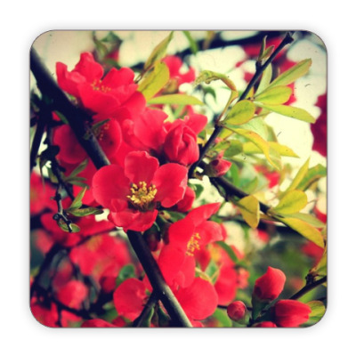 Костер (подставка под кружку) цветение