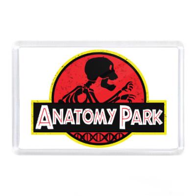 Магнит Anatomy Park