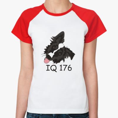 Женская футболка реглан бордер колли
