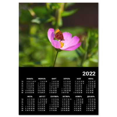 Календарь Садовая ромашка
