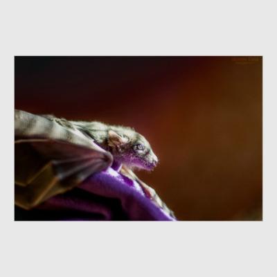 Постер Пушистый дракончик