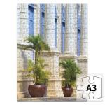 Две пальмы около здания с колоннами