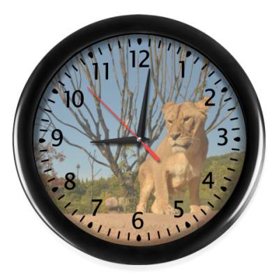 Настенные часы Львица в саванне