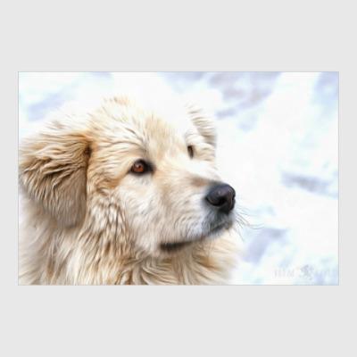 Постер Собака