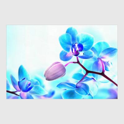 Постер Орхидея