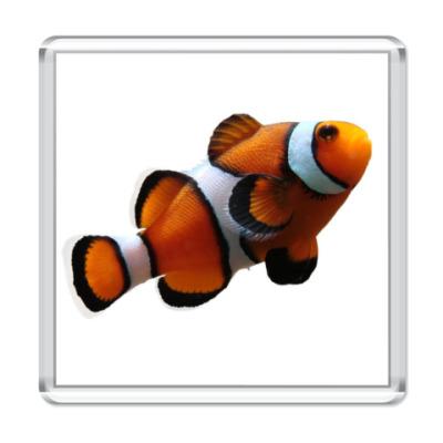 Магнит  Рыба-клоун