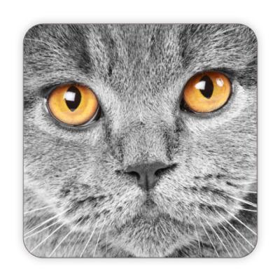 Костер (подставка под кружку) Котик
