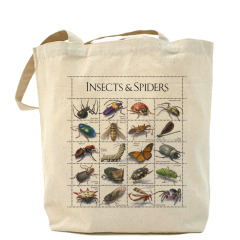 Insects&Spiders