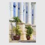 Две пальмы
